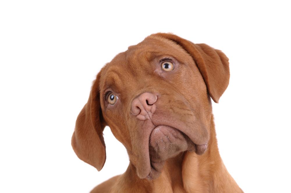 Basiscursus 'Oog voor honden' – Online