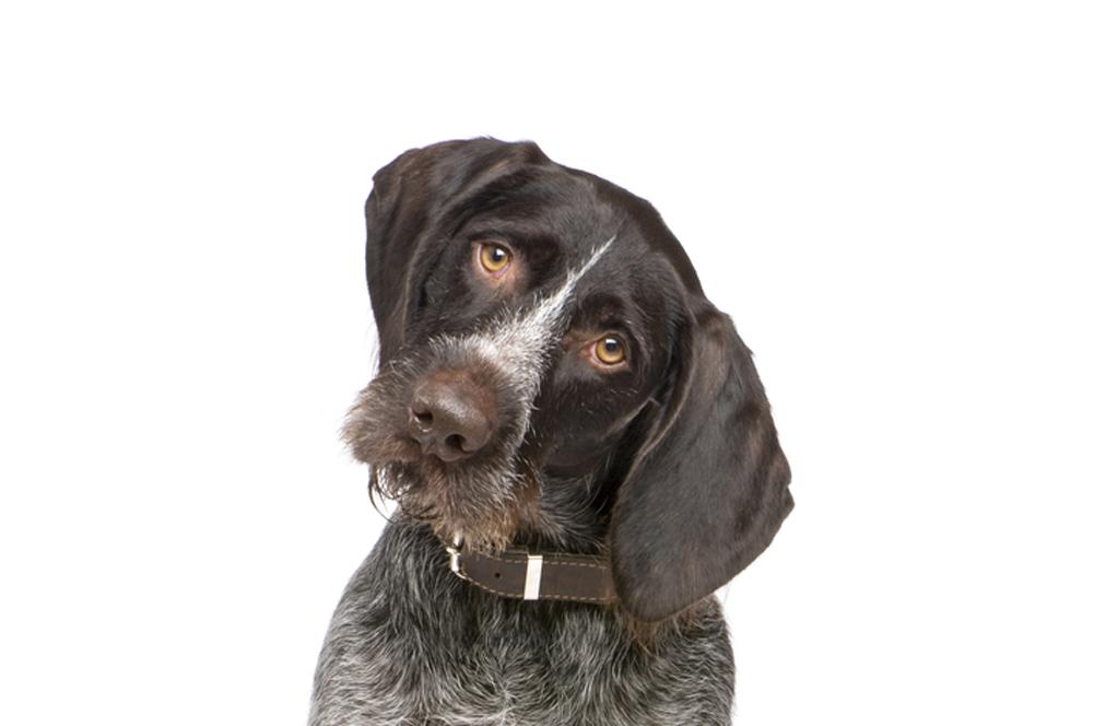 Basiscursus 'Oog voor Honden' – Hondenschool*
