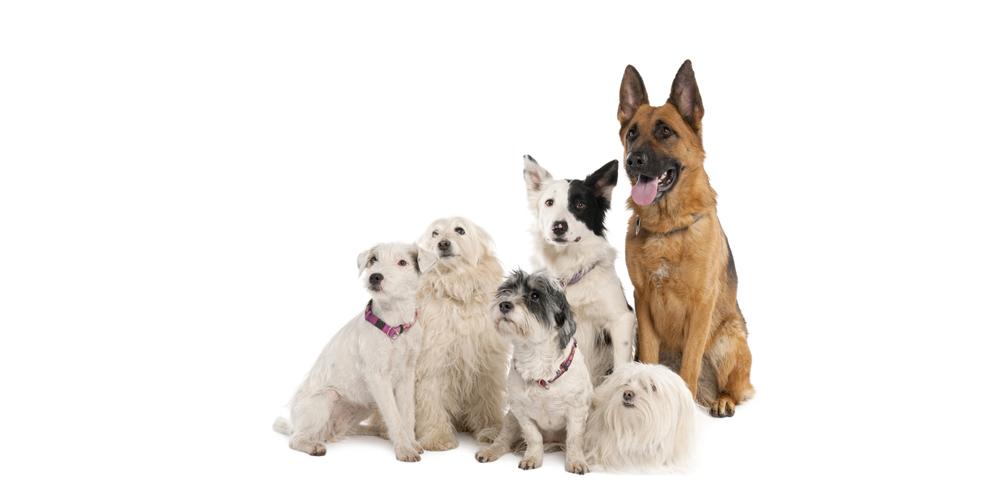Vervolgcursus 'Sociale Huishond'