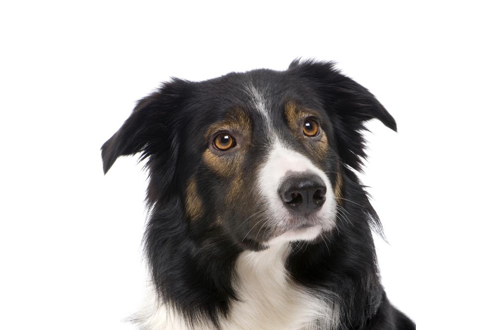 Basiscursus 'Oog voor honden' – Privé-lessen