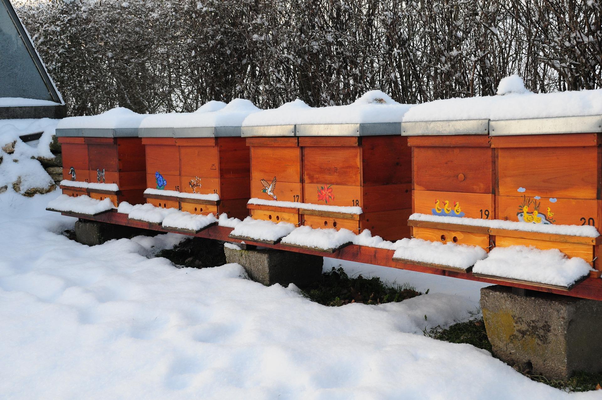 Colmenas de abejas cubiertas de nieve. La producción de miel no para en invierno.