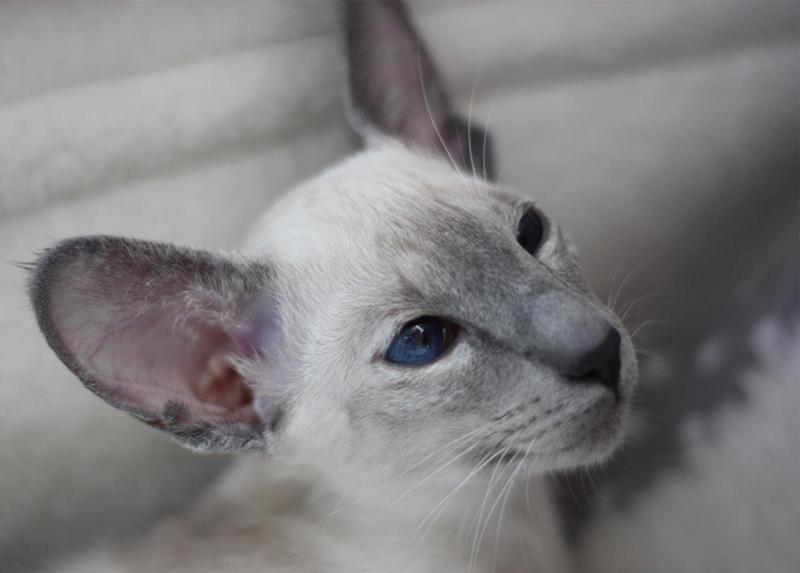 Stilstudie i kattungebus