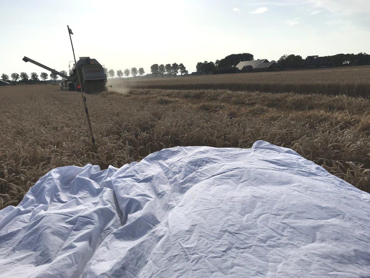 Beschermen van het nest tijdens de tarweoogst / Protecting the nest during the harvest of the wheat