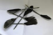 Veren van de jongen / Feathers of the young birds