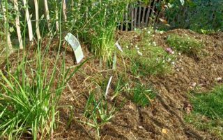 hugelbed mikrogaarden