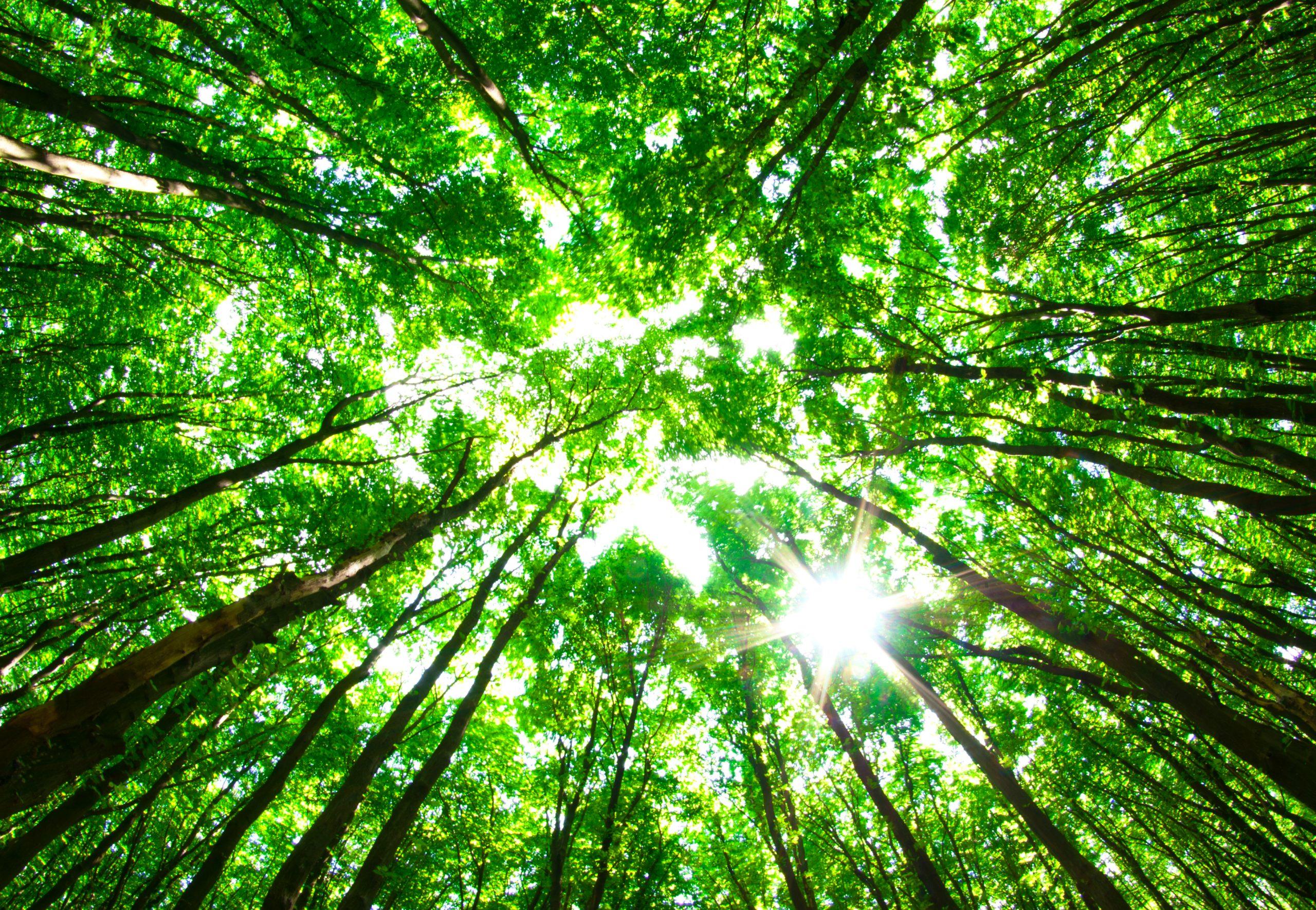 Find din miljøvenlige vinduespudser