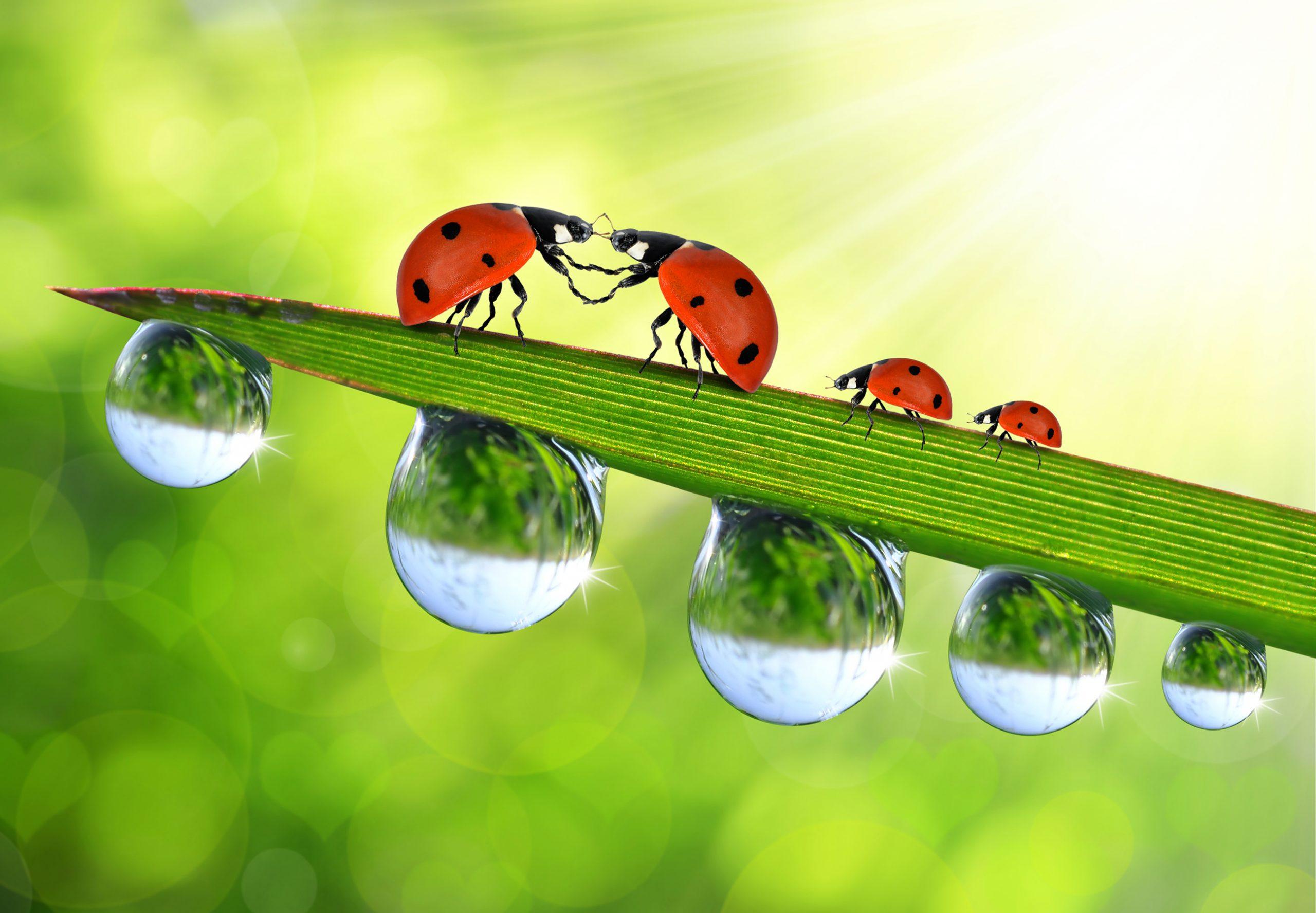Bliv miljøvenlig vinduepsudser