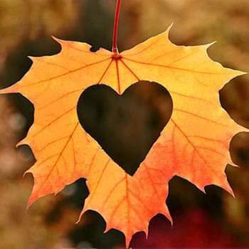 Blog: Hoe overleef ik de herfst?