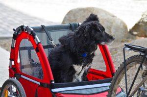 hond-in-fietskar