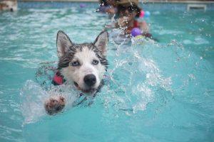 hond-leren-zwemmen
