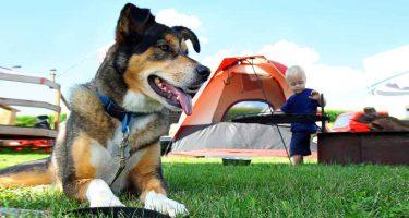 hond-op-camping-met-kind