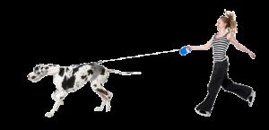 hond-trekt-lijn1