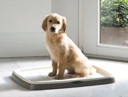 honden-toilet