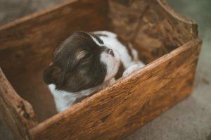 puppy-eerste-nacht