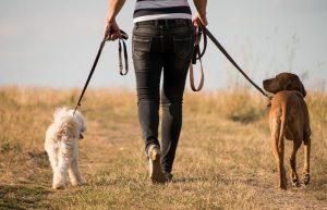 wandelen-met-meerdere-honden