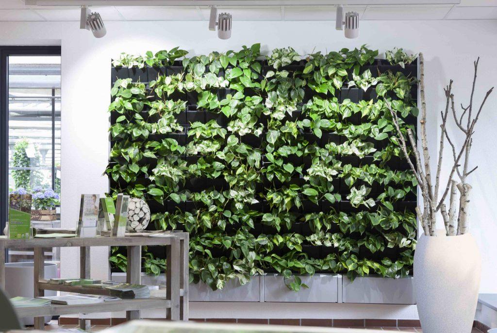 Groene wand binnen in huis of in de burelen, leefruimte of werkruimte.