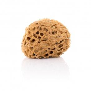 Natursvamp - Honeycomb