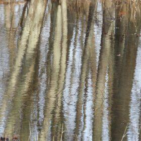 vattenspegling och skogsbad