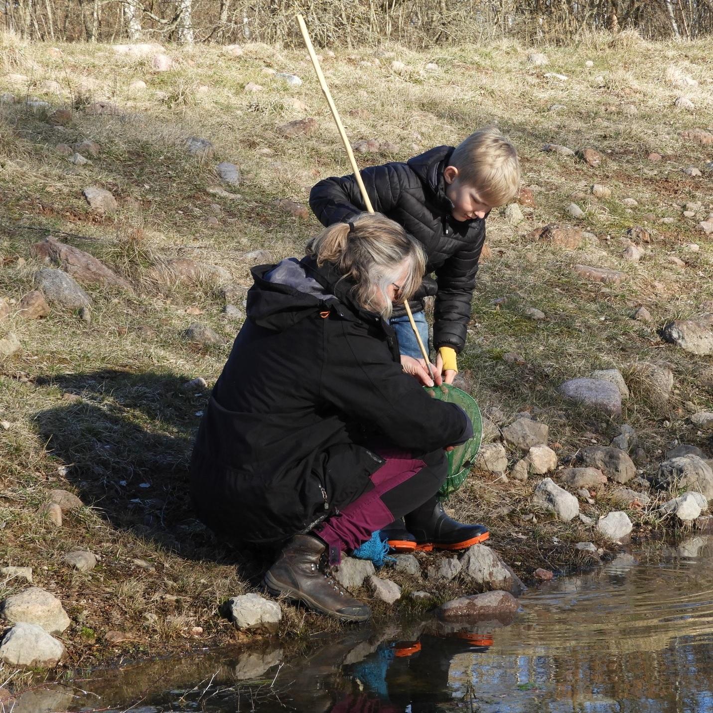 Salamanderspaning på Mittlandsgården, foto: Caroline Kindblom Landtmanson, Ölandsguide