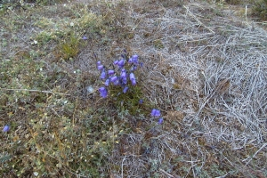 1999-2000 Ilulissat_0107