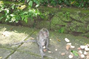 Bali2007_0023