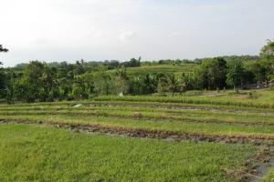 Bali2007_0032