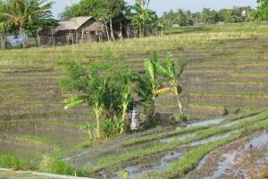 Bali2007_0033