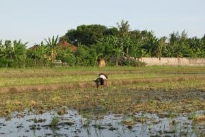Bali2007_0035