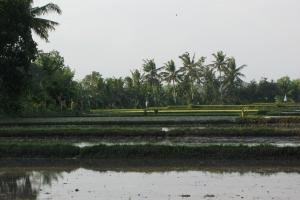 Bali2007_0037