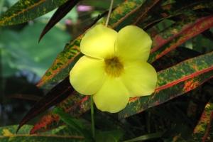 Bali2007_0112