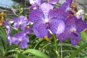 Thailand2008_0058