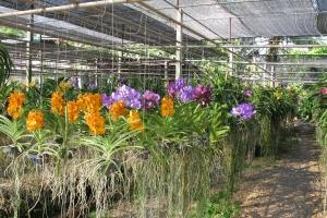 Thailand2008_0060