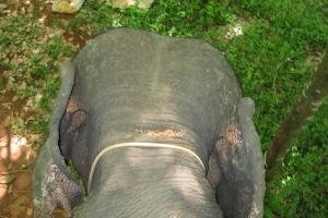 Thailand2008_0114