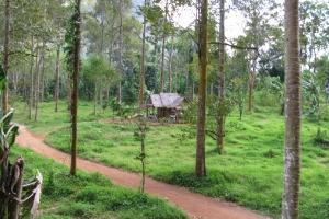 Thailand2008_0121