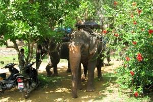 Thailand2008_0122