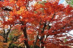 Japan2009_0209