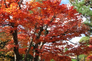 Japan2009_0210