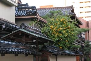 Japan2009_0319