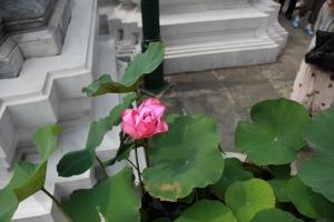 2010 Bangkok_0115