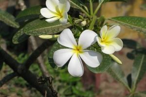 2011 Cambodia_0141
