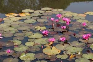 2011 Cambodia_0321