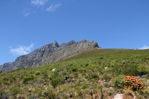 2012 Cape Town _0100