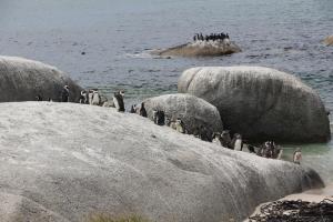2012 Cape Town _0181