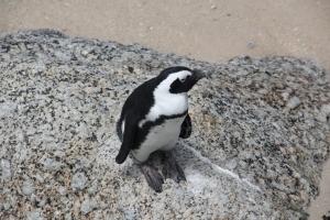 2012 Cape Town _0186