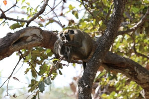 2014 Gambia_0081