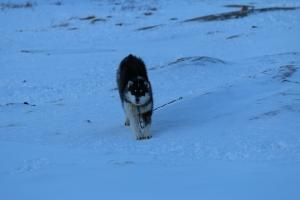2014 Ilulissat_0059