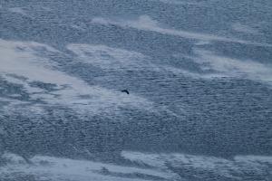 2014 Ilulissat_0232