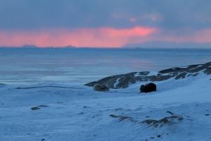 2014 Ilulissat_0249