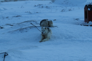 2014 Ilulissat_0250