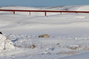 2014 Ilulissat_0440